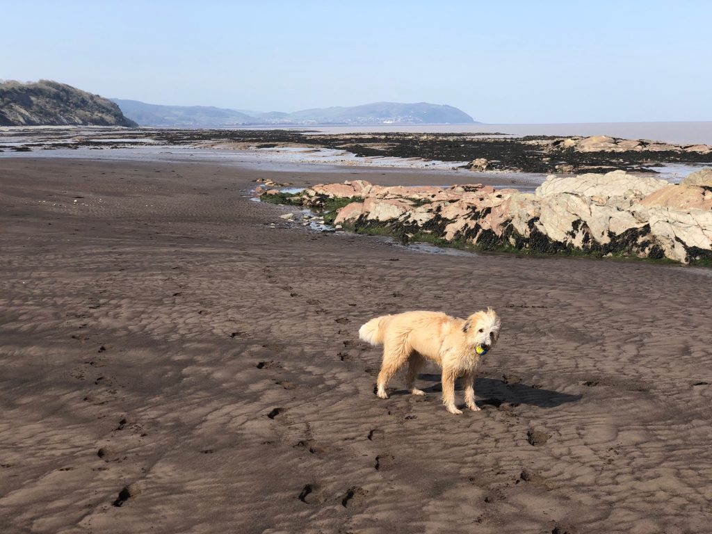 COVID-19 DIARIES. DAY SEVEN- DOG WALKING AND FOSSILS